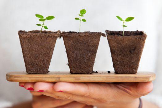 Sreda (20.3.) – seme novog životnog ciklusa